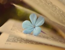 Little blue flower under the book pages - HD wallpaper