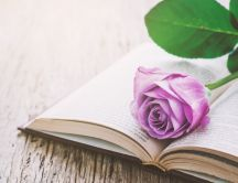 Romantic pink rose on a book - Read for your study