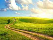 Country road on a beautiful green field - Spring sunny day