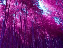 Wonderful pink forest - Nature landscape