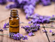 100 Benefits from Lavender Essential Oil - Good to have