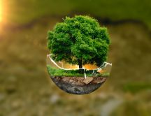 Little green tree in a broken crystal globe - Nature revive