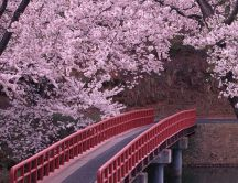 Cherry Blossom Flowers - Red Bridge HD wallpaper
